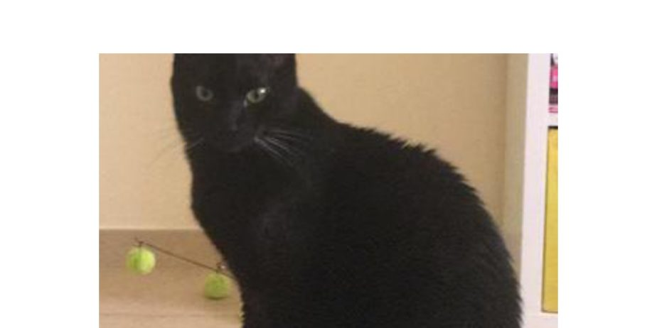 Missing-Cat_page-0001